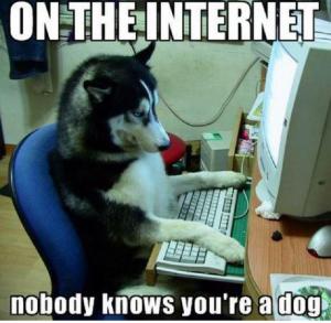 Dog online